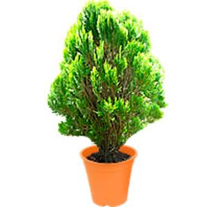 Plantas de exterior baratas dise os arquitect nicos for Plantas ornamentales de exterior